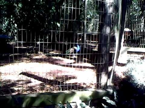 zoológico Bauru