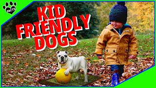 Kid Friendly Dogs - 10 Dogs That Love Children