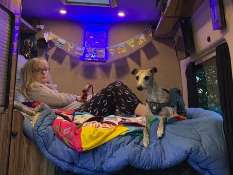 Campervan Dog (living with a Whippet)