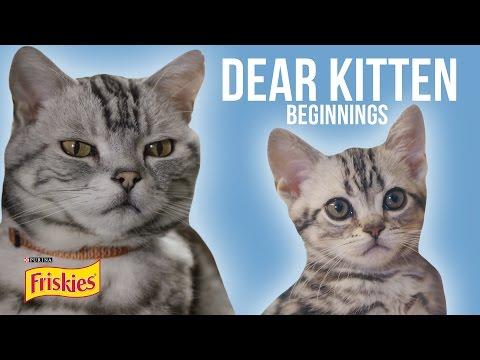 Dear Kitten: Beginnings // Presented By BuzzFeed & Friskies