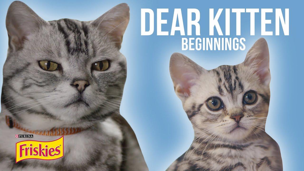 Snapchat Kitten LeBow naked (12 photos), Tits, Hot, Selfie, braless 2018