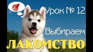Урок 12/Ч.1 Обзор лакомства для дрессировки щенка от Виталия Голоты