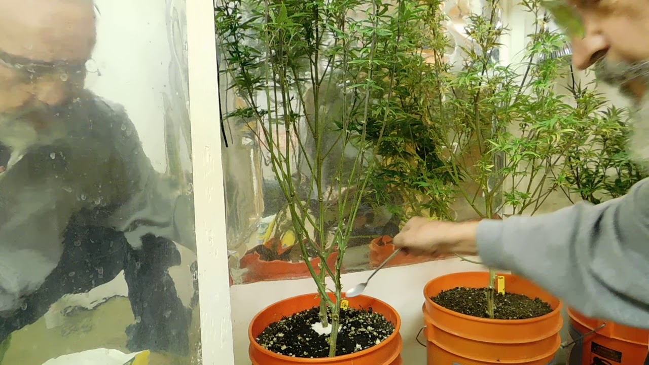 Грунт для марихуаны нужен какой марихуаны грам