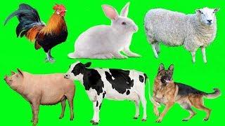 Download Lagu Bunyi haiwan untuk kanak kanak : ayam, keldai, anjing, lembu, kambing, angsa, ltik, kucing, babi mp3