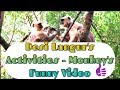 🐵 FUNNY MONKEY FAMILY   DESI LANGUR 🐒 DAILY LIFESTYLE ACTIVITY   INDIAN WILD MONKEYS COMEDY