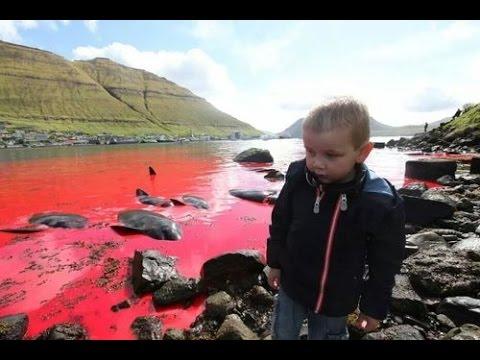 The Last Of The Barbarians - Sea Shepherd back in the Faroe