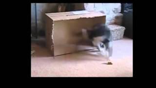 Приколы с собаками и кошками