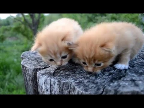 👍Cute Cats Compilation 2017👍