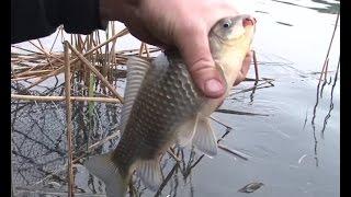 Поплавочная рыбалка в городе. О рыбалке всерьез. Мастер-класс 313 HD