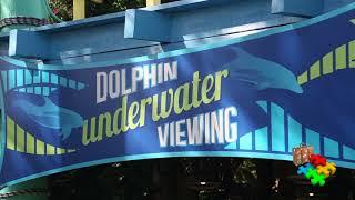 SEAWORLD Sea Creatures Dolphins