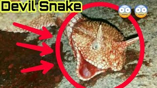 Devil Snake😨😱 in Pakistan Real horror snake 2019