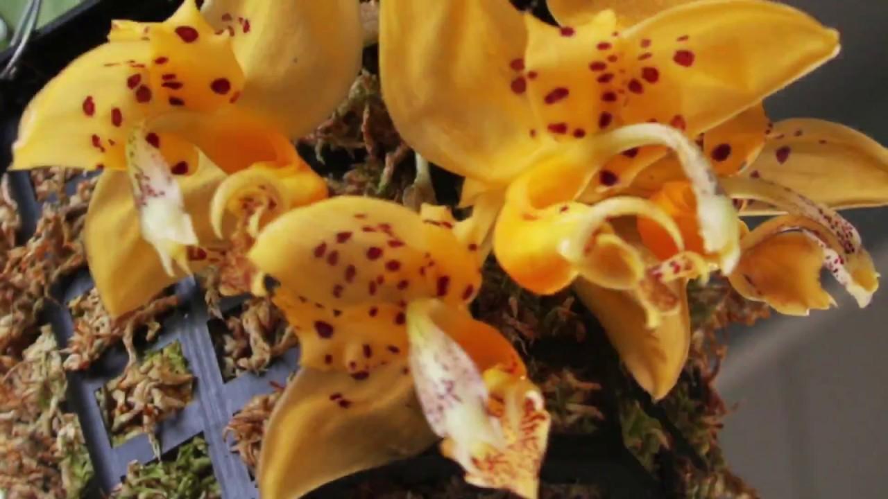 Купить орхидеи на ебей