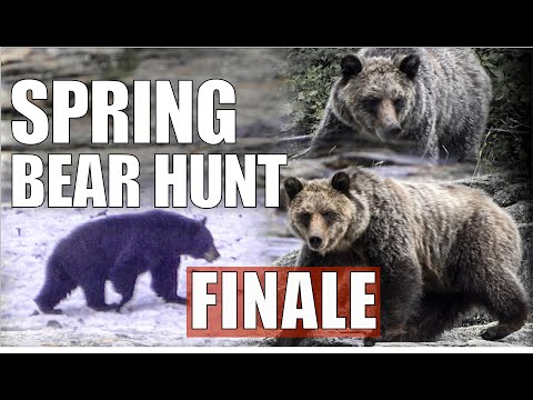 SPRING BLACK BEAR HUNT | BIG BLACK BEARS | GIANT GRIZZLIES | BEAR HEART ON THE MOUNTAIN | S1 | EP11