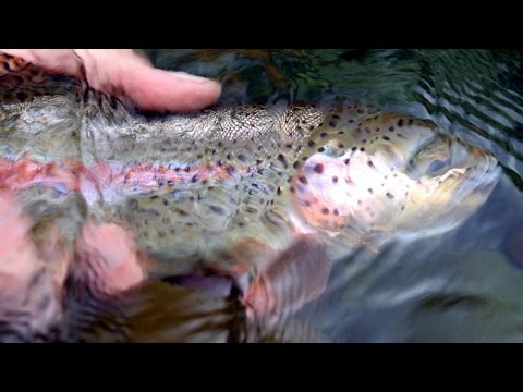 McKenzie River Fly Fishing - Fishing Action Sample