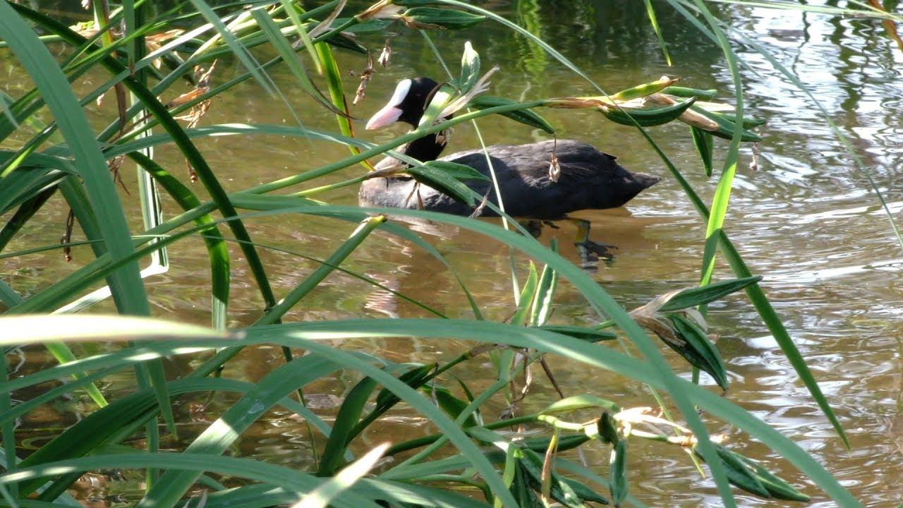 Les oiseaux en bords de Seine