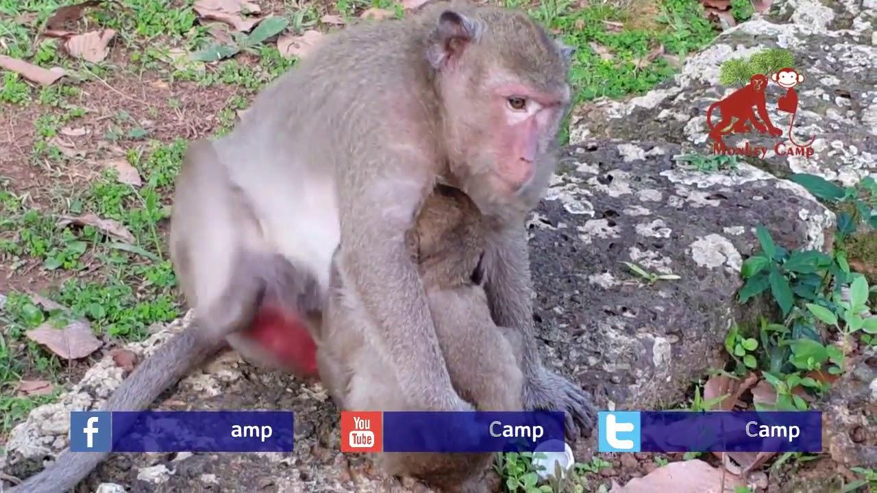 baby monkey cry cuz hungry, baby monkey cry cuz want to