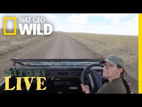 Safari Live - Day 16 | Nat Geo WILD