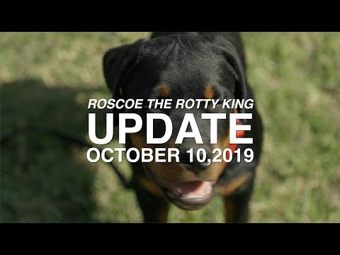 ROSCOE THE ROTTWEILER FOUR MONTH UPDATE