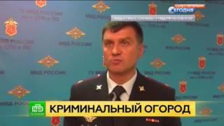 В Петербурге ликвидировали плантацию конопли в квартире