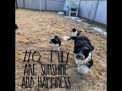 PuppyFinder.com : 12 reasons for Porties