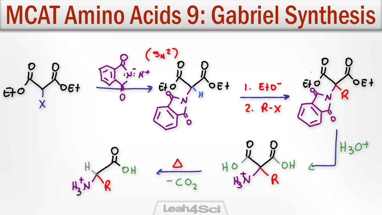 Gabriel Malonic Ester Synthesis of alpha Amino Acids