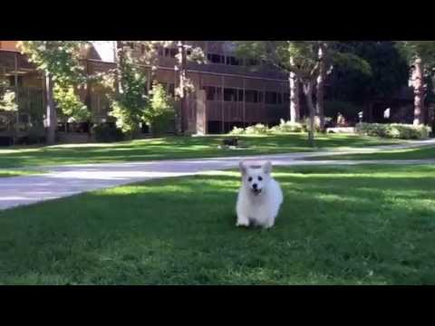 Winston Herds a New Friend at UCLA