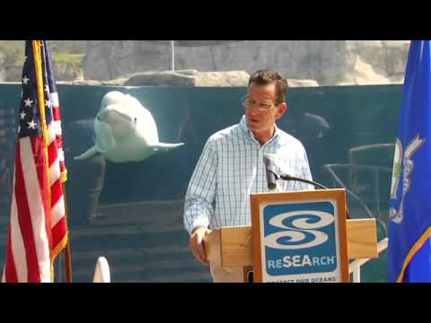 Baby beluga whale photobombs Connecticut Governor Dannel Malloy