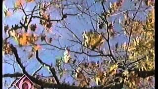 WDSU New Orleans 6 News 5 PM Newscast - 12/25/1998