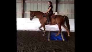 Lover Boy WH 2006 half-Arabian gelding OFFERED FOR YOUR CONSIDERATION