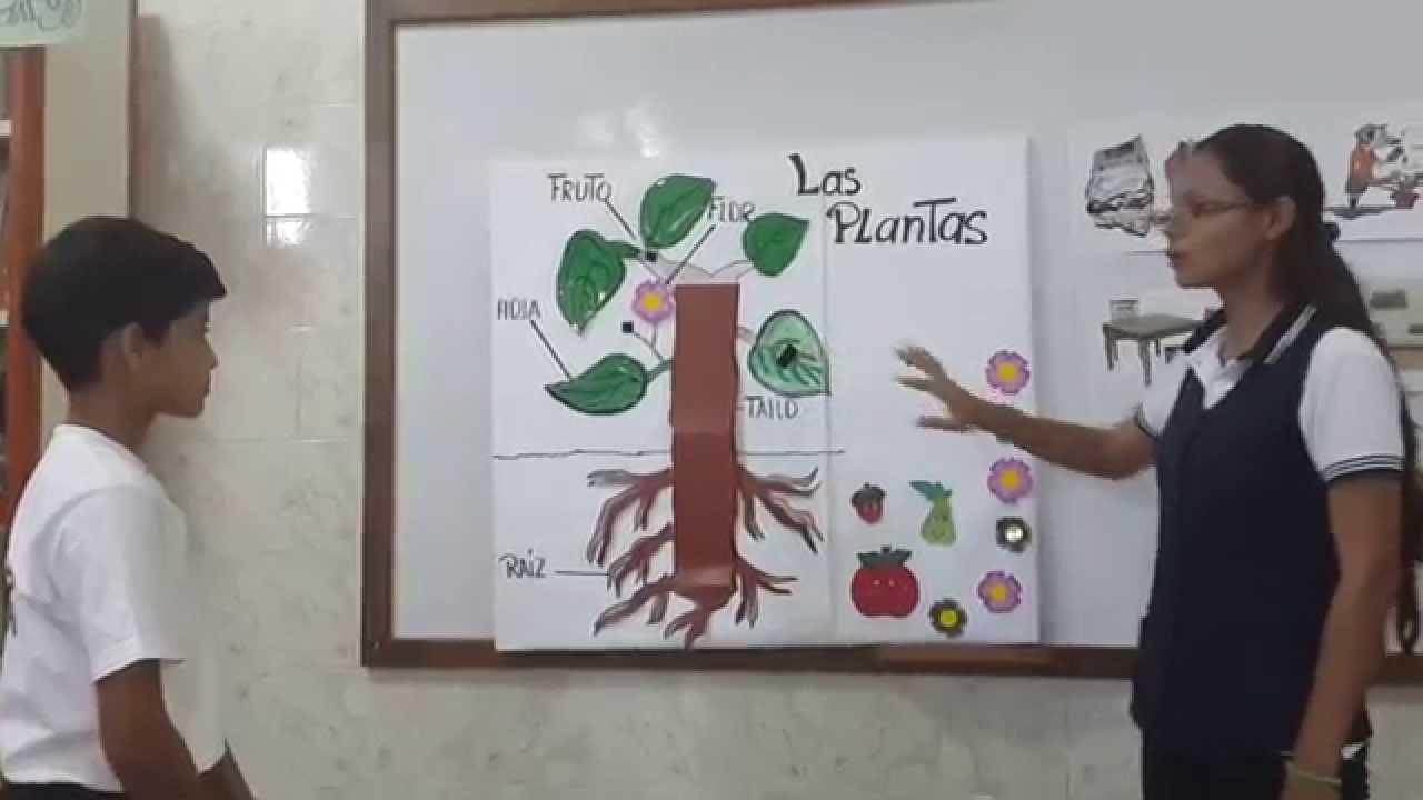 Micro Clase Las Plantas Y Sus Partes Youtube