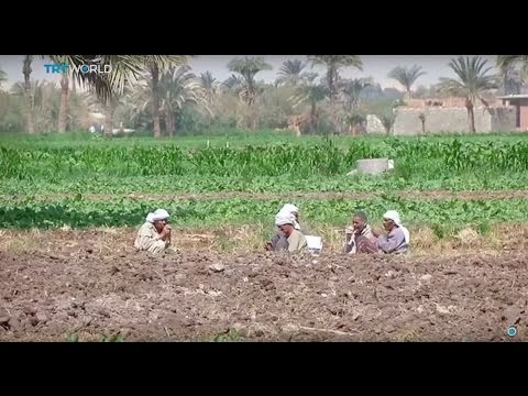 Money Talks: Farming without water in Egypt