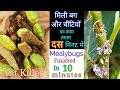 How to instantly get rid of Ants and white Mealybugs  Top ways to Kil ants in 10 minutes