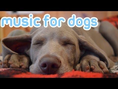 Deep Sleep Relax My Dog Music! Calm Your Dog and Help them Sleep!