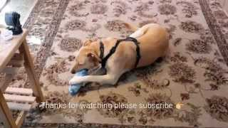 DIY DOG TOY FOR CHEAP