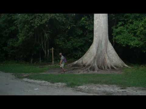 Goofing Around In Tikal at the Ceiba Tree