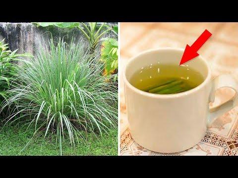 Why Lemongrass Tea Should Be Your New Favorite Drink (Lemon Grass Benefits)