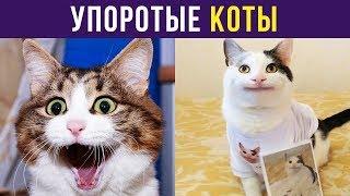 Приколы с котами. Упоротые коты | Мемозг #122