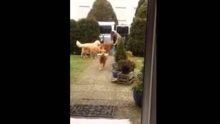 собаки помощники