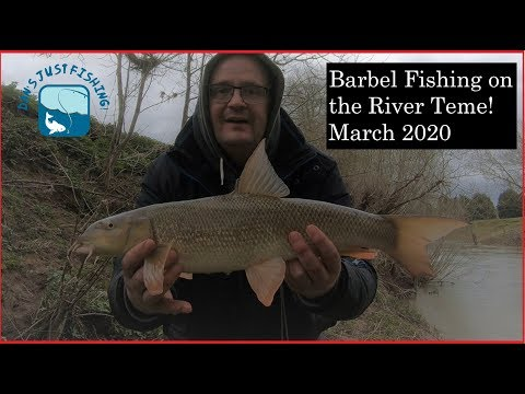 Barbel Fishing On The River Teme March 2020!