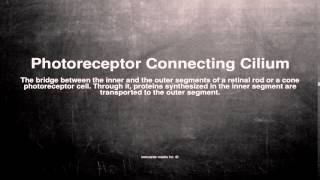 Medical vocabulary: What does Photoreceptor Connecting Cilium mean