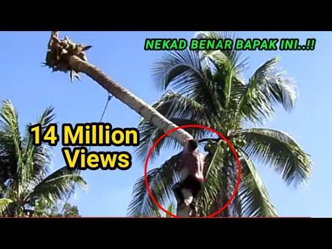 Sang Ahli Pemotong Pohon Kelapa Hanya Dibayar Rp.100 Ribu?