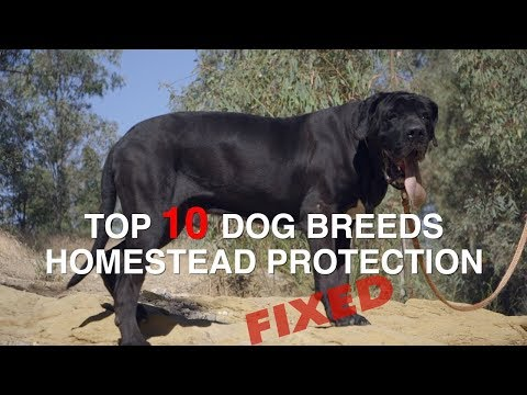 TOP 10 DOG BREEDS FOR HOMESTEAD PROTECTION (FIXED)