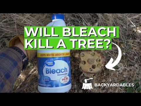 Will Beach Kill A Tree? | How To Kill A Tree