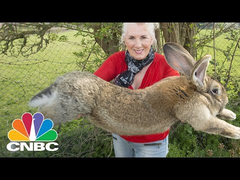 Giant Rabbit Who Died After United Flight Sparks Legal Battle: Bottom Line | CNBC