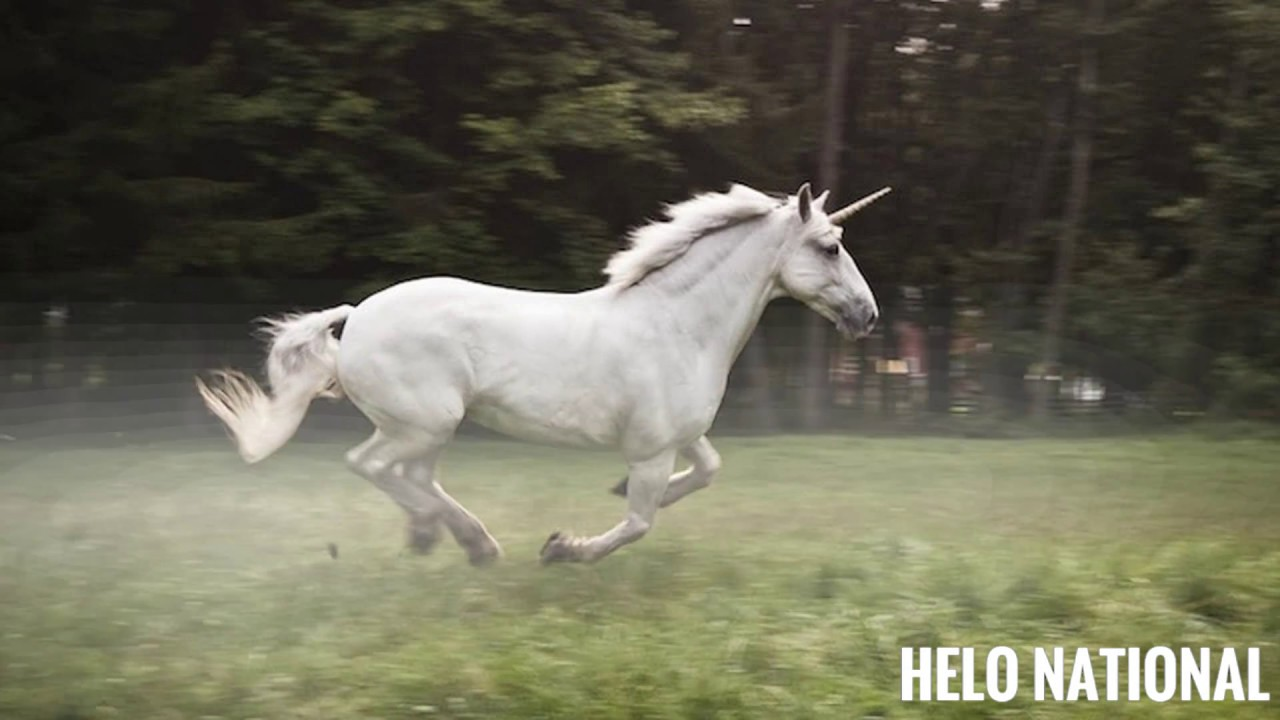 Amazing And Surprising Facts About The Unicorn The National Animal Of Scotland Unicorn Youtube