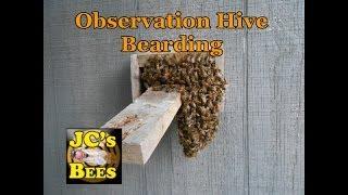 Observation Hive Bearding