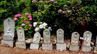 ●山陽花の寺(アジサイ寺)第24番霊場・観音寺のアジサイまつり!