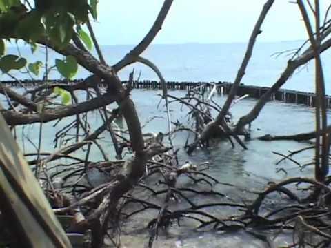 Port Honduras Marine Reserve - Southern Belize