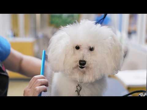 The Pet Company (Petco)