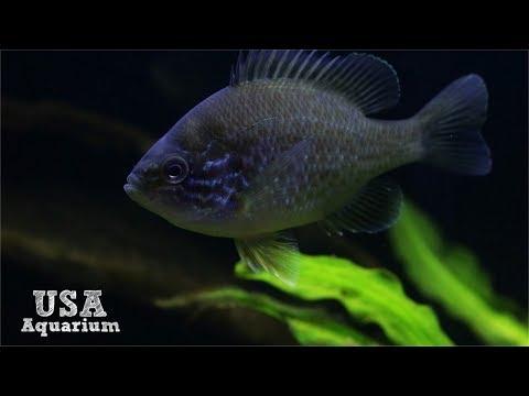 My North American Display Aquarium